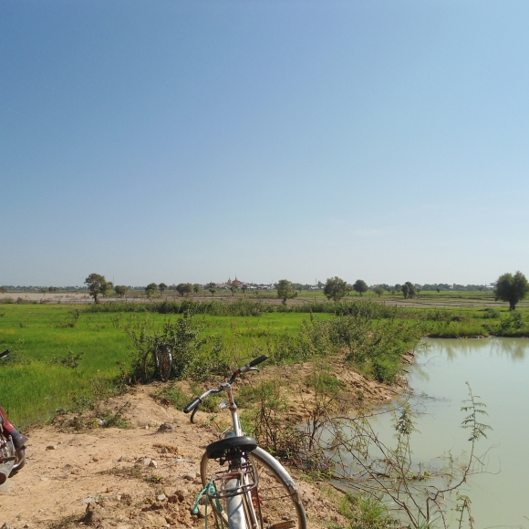 Cycle in the rice fields